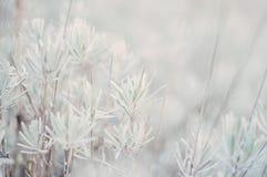 白色Bokeh自然植被 图库摄影