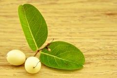 白色carunda或karonda在左下 免版税库存图片
