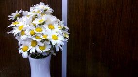 白色daisys 库存照片