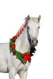 白色horsein圣诞节花圈 库存图片