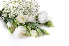 白色lisiantus花 库存图片