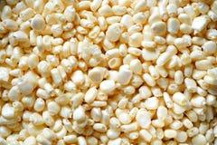白色niblets背景/白色玉米五谷背景 库存照片