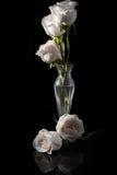 白色Rose& x27; s 库存图片