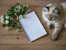 白花、空白的笔记本和一只猫在木桌,顶视图上, flatlay 免版税库存图片