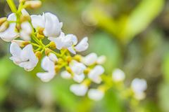白花储蓄照片  免版税库存照片