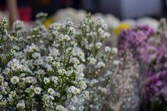 白花出售在花市场上 库存图片