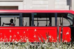 白花和一辆红色双层汽车 免版税库存照片