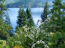白花和杉木在湖前面 免版税库存图片