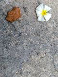 白花和棕色叶子秋天在水泥地板上 库存图片