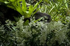 白花和热带植物叶子 免版税库存图片