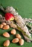 白花和红色郁金香的构成用杏仁 免版税图库摄影