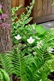 白花和蕨叶状体 免版税库存照片