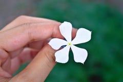 白花在一个女孩的手上在庭院里有美好的绿色背景所有 免版税库存照片