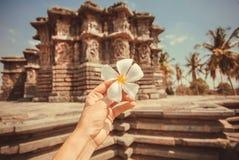 白花在一个游人的手上通过印度的12世纪印度寺庙的 假期心情 免版税库存图片