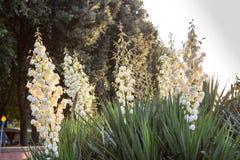 白花在佛罗伦萨,意大利城市公园  库存图片