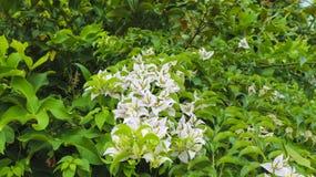 白花在公园在庭院里 图库摄影