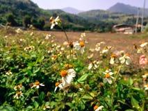 白花在小山的庭院里 免版税库存照片