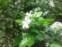白花在庭院里 免版税库存照片