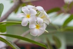 白花在庭院里 库存图片