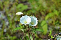 白花在森林里 免版税库存照片