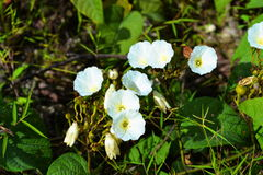 白花在森林里 免版税库存图片