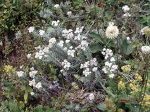 白花在森林里 库存图片