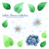 白花在白色背景的水彩汇集,手拉为贺卡,喜帖,案件设计,明信片, PR 皇族释放例证
