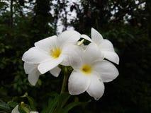 白花在绿色背景中 图库摄影