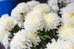 白花在花市场上 图库摄影