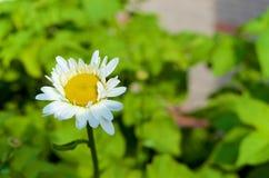 白花有绿色背景 库存图片