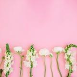 白花框架-毛茛属和snapdragonon桃红色背景 平的位置,顶视图 背景细部图花卉向量 库存图片