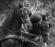 黑白花的马 免版税图库摄影