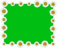 白花藤边界绿色背景 免版税库存照片