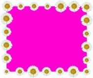 白花藤边界紫色背景 免版税库存照片