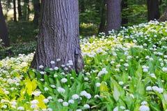 白花领域在森林里 图库摄影