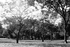 黑白草地在大城市公园 图库摄影