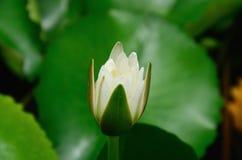 白莲教。自然河泰国 免版税库存照片