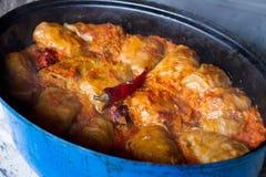 白菜卷叶子,传统匈牙利食物 库存照片