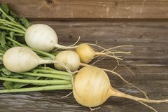白萝卜 庭院蔬菜 免版税库存照片