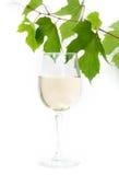 白葡萄酒和藤 免版税库存图片