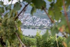 白葡萄酒葡萄地区摩泽尔维宁根14 免版税库存图片