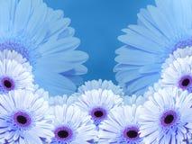 白蓝色花,在蓝色被弄脏的背景 特写镜头 花拼贴画 库存图片