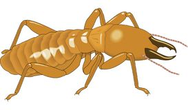 白蚁传染媒介例证 库存例证