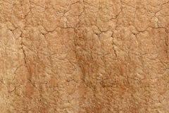 白蚁土墩土壤结构,背景 免版税库存照片