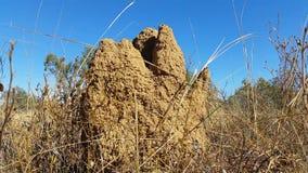 白蚁在内地土墩澳大利亚人 股票录像