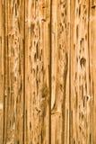 白蚁被吃的木头 库存照片