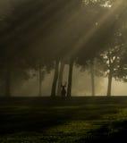 白被盯梢的鹿大型装配架在有雾的早晨 库存照片