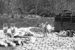 黑白野餐 库存图片