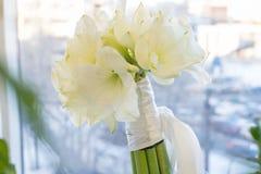 白阿马里丽斯花束  新娘,庆祝和Birhtday概念 ?? 免版税库存照片