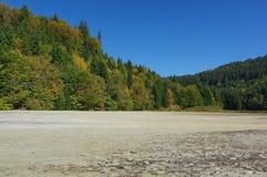 白陶土在森林里 免版税库存照片